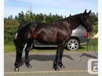 Very stunning gorgeous mare 16hh. Easy to handle and in