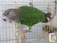 I am selling my women brownish goinged parrot. She is