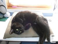 Gucci is a happy and vocal black male cat. He is
