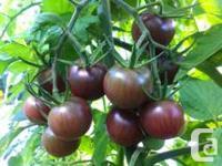 Variety of 1 gal tomato plants. Tomato types: *Organic