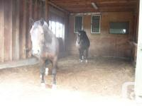 Horse facilities available for lease May 1st Possession