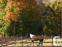 Welcome to Huckleberry Farm, your equestrian paradise.