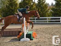 Beautiful 16.1H Chestnut mare for 2-3 day/week lease.