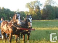 Do you have a horse to sell, tack or equipment then