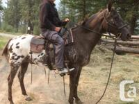 I am a retired teacher. I am an experienced rider and