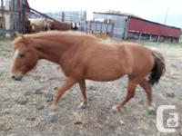 Two horses for sale. One is a Quarter horse gelding,