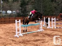 Super easy ride, Conner is a 16,2 hh Tb gelding, goes