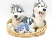 HUSKY DOG FAMILY - MAMA, PAPA & BABY HUSKY DOGS IN A