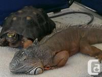 We have an Iguana and Tortoise they are both tropical