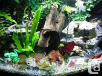 These are some of my previous aquariums and creative