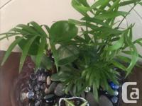 Indoor Plants ,Spider,Peace lily,Coleus plants and more