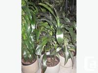 I have offering variety of household indoor tropical