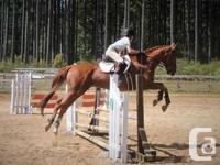 Seasoned eventer, very well schooled. Point and shoot