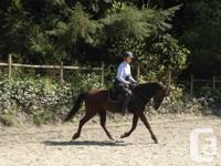 12 year old 14.2hh registered Morgan mare. This flashy