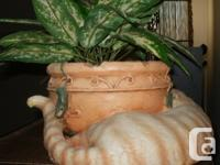 Reduced price - $20 for 'Kitty' planter and $15 for