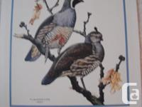 Circa 1955 F. Lansdowne prints: Macgilliveray's Warbler