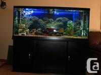 This is a very nice 470 liter fresh water fish tank