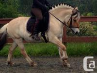 The new Enlightened Equitation FlexEE saddle is a high
