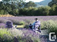 New Lavender Bushes for your garden. With the end of