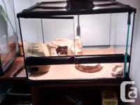 leopard gecko gecko for sale in British Columbia - Buy