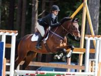 The focus of Scott Equestrian in the show arena has