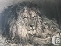 Very Detailed Vintage Etching of Lion and Lioness