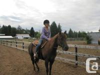 Looking for my old horse named patsy, her show name is