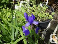 hostas, ferns lots flowering perennials, ground covers,