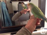 I am selling 2 lovebirds and their beautiful cage. I