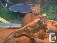 4 year old male bearded dragon. Comes with 90 gallon