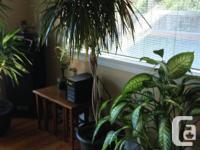 A variety of house plants for sale between $20-$50 each