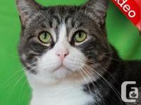 Sad Barcley is waiting....Shy Cat - Level 3 Barcley was