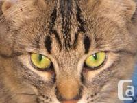 Meet Lord Eddard - Shy Cat Level 2. Eddard is a