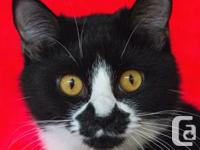 Meet Tandy, the cat with a moustache! Tandy is a