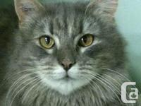 Listen to Lady! This cat has a lot to say. At first she
