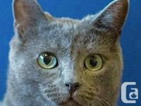 Name Your Adoption Fee - Kelby is one lucky cat! Shy