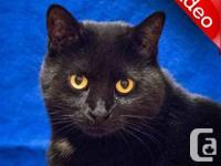 Magnificient Mali - Shy Cat - Level 4. Mali was rescued