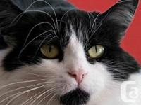 Eyes of wonder! Shy Cat - Level 2 Tamia is a shy beauty