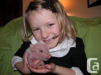 Check out my Mini/Julian piglets. Soooooo cute and as