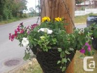 +Moss Hanging Baskets, Ceramic Planters and more for