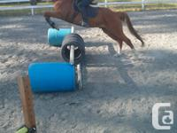 Naughty QH/Arab Chesnut Gelding, 15.1 hh, 11 years