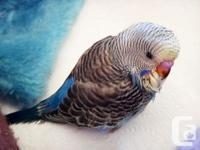 I have 4 new born budgies nearly one month old now.