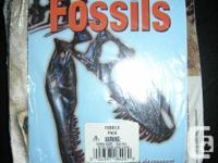Brand name New Scholastic Make a Dinosaur Fossil