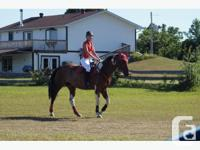 ** NEW PRICE** ATTENTION Horse People!! Half-pad made