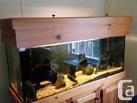 70 gallon tank; 4 feet long; stand; cover; Aqua Clear