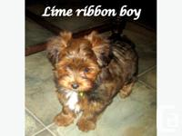 Penny and Gizmo's puppy will be a great family pet, is