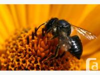 Establish a Mason Bee home in your backyard and