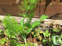 Variety of plants and herbs and some tree-seedlings,
