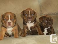 Clearbrook Kennels is pleased to announce a outstanding
