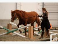 Part lease available for adult rider aged 14 years or